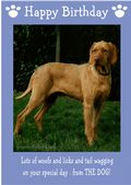 "Hungarian Wire Haired Vizsla-Happy Birthday - ""From The Dog"" Theme"